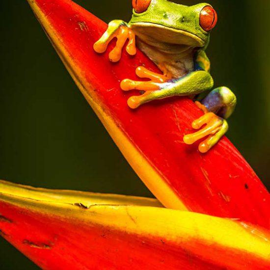 Costa Rica Holidays. Destination Overview