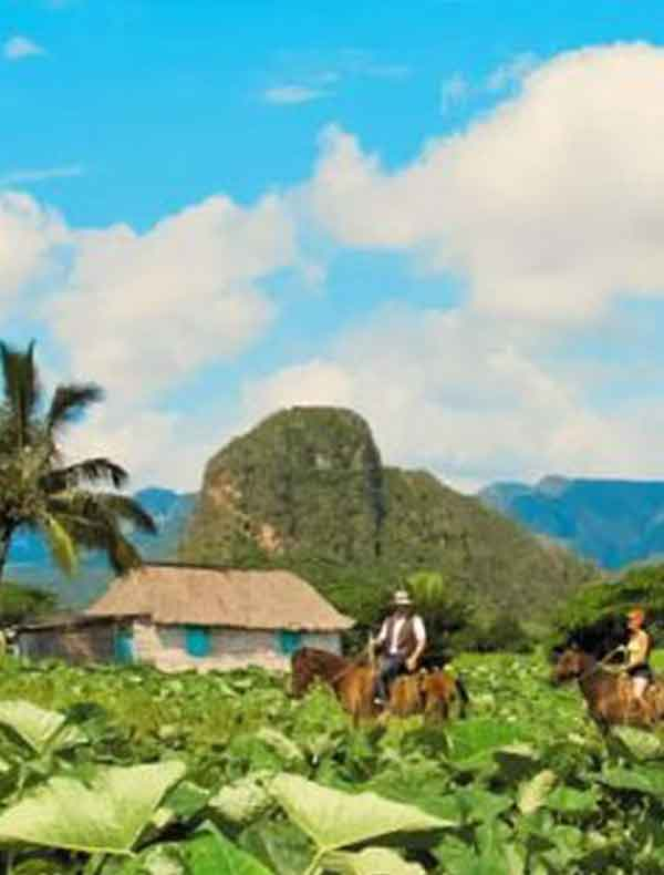 Vinales is also the land of the world-famous Cuban tobacco plantations.