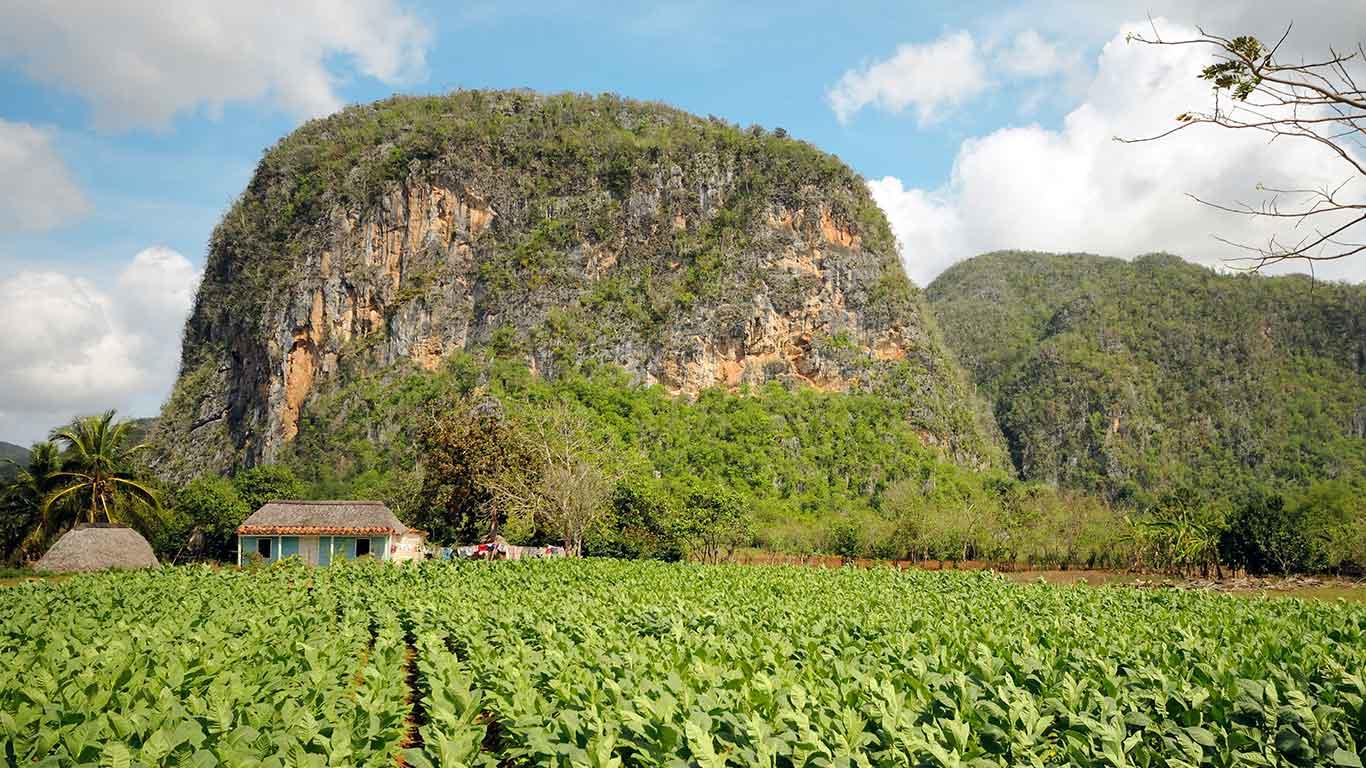 Tobacco plantation and vernacular farm in Vinales, Cuba