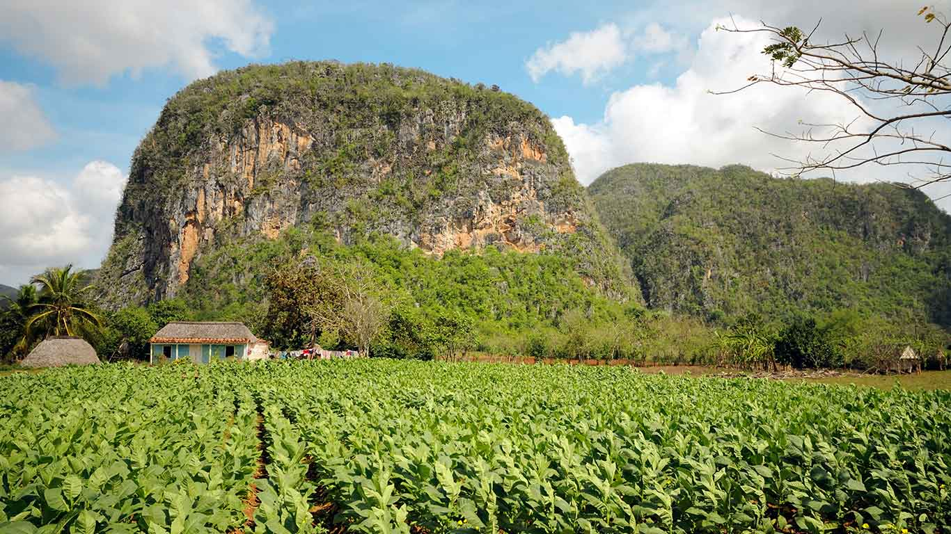 At the Valley of Vinales, UNESCO Heritage site since 1999, tobacco is grown and turned into the world-famous Havanos using centuries-old farming techniques