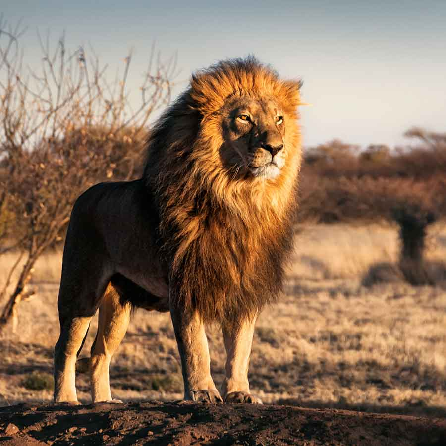 Holidays in South Africa. Best selling holiday packages and suggested tailor-made itineraries