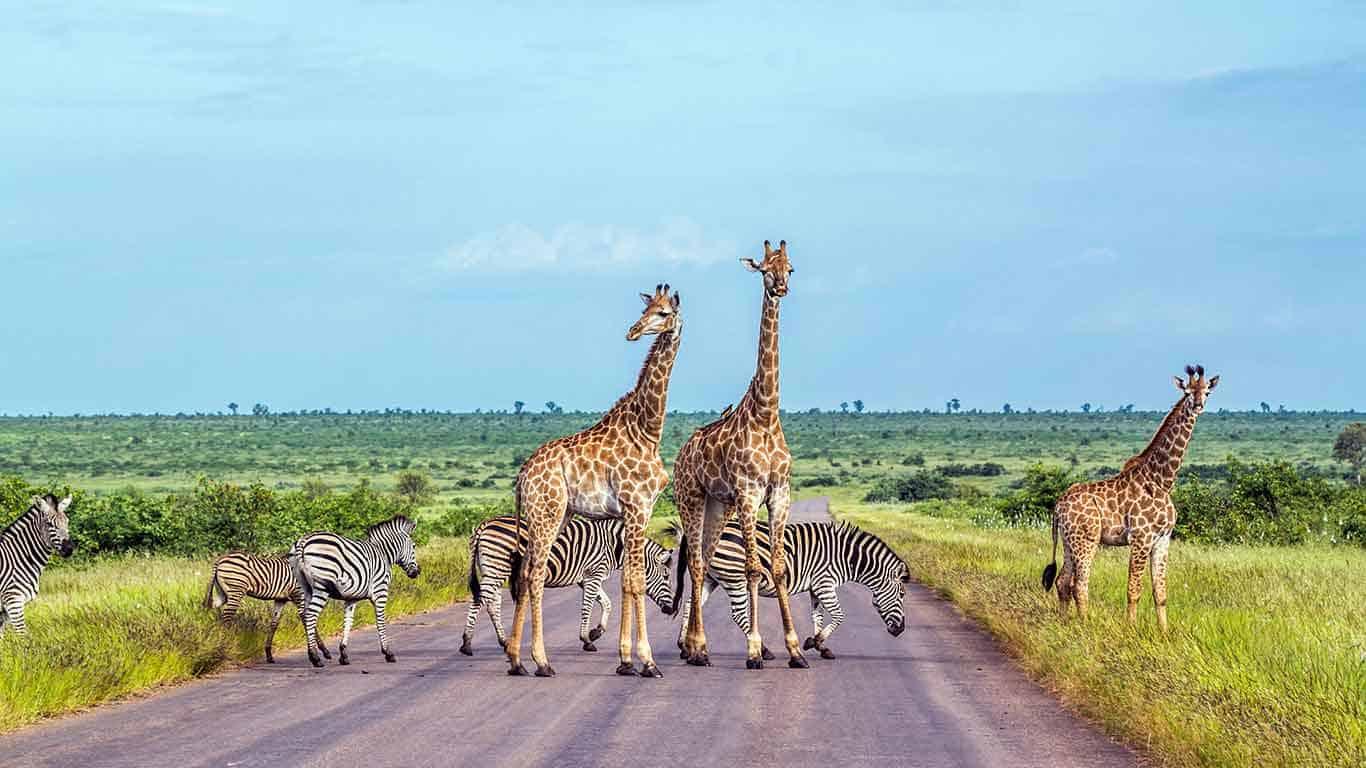 Kruger National Park, Holidays in South Africa