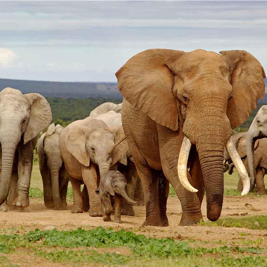 Kruger National Park Vide. Latest sightings