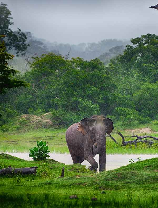 Sri Lanka National Parks and Safaris