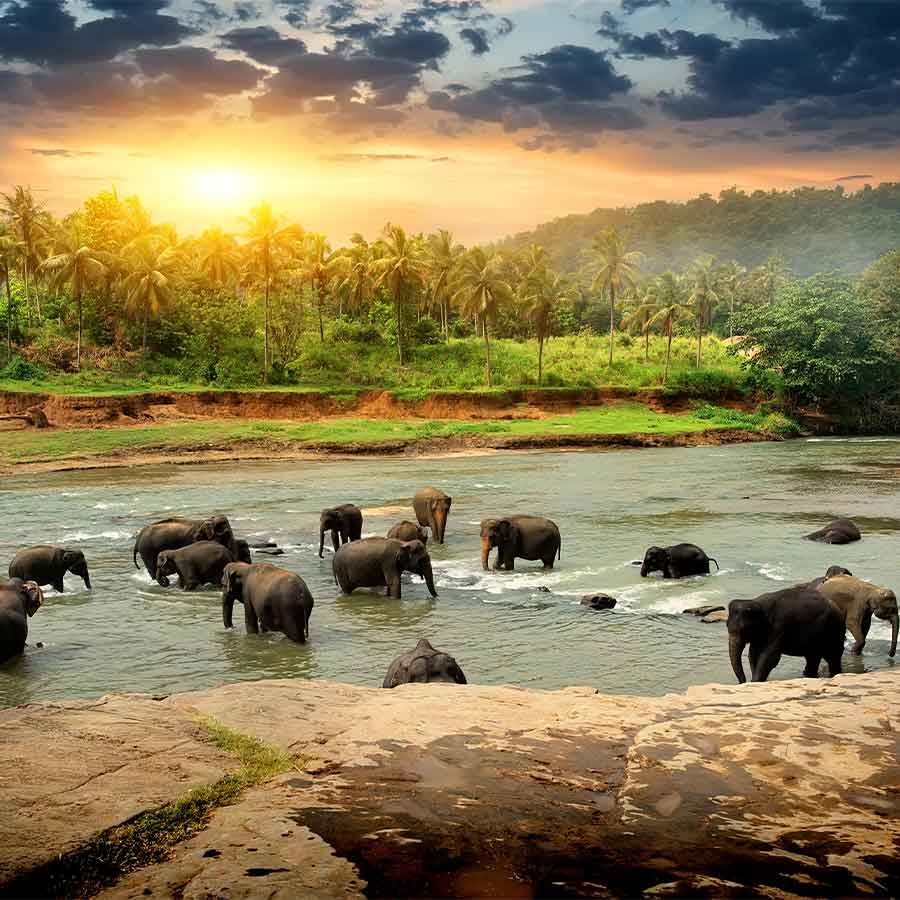 Sri Lanka National Parks and Safaris
